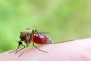 Thuốc xịt côn trùng có hại cho sức khỏe không?