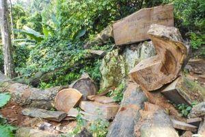 Gia Lai: Điều tra làm rõ vụ khai thác gỗ trái phép tại đồi Chư Jú, thị xã Ayun Pa