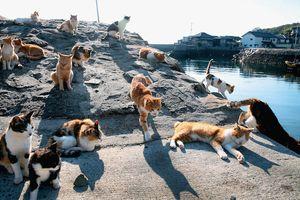 #Mytour: Một giờ khám phá làng mèo Hầu Động, Đài Loan