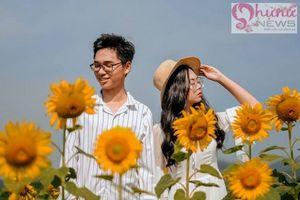 Chẳng cần đi đâu xa, ở Huế cũng có cánh đồng hoa hướng dương khiến giới trẻ mê mẩn