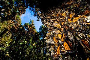 Những hiện tượng thiên nhiên đầy màu sắc trên thế giới