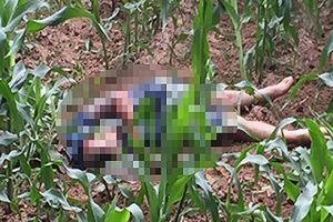 Nam thanh niên tử vong dưới ruộng ngô sau cuộc hỗn chiến