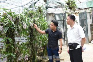 Làm giàu từ mô hình trồng phong lan
