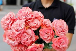 Ngắm 'kỳ quan' của các loài hoa Nhật Bản giữa Sài Gòn