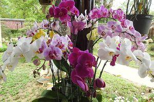 Chùm thơ về hoa