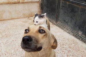 Chùm ảnh: Yêu nhau như chó với mèo là có thật?