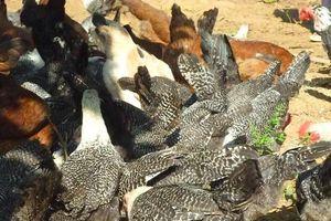 Lão nông 'ném' hơn nửa tỷ để thuần dưỡng nhiều giống gà quý hiếm