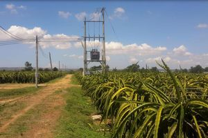 Bình Thuận: Khởi tố vụ án 'đánh chiếm' trang trại thanh long Hồng Ân