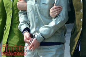 'Biến' ngô giả thành thật, cán bộ Viện Nghiên cứu Ngô lĩnh án tù