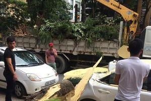 Cây lớn đổ đè bẹp xe Lexus ở Hà Nội