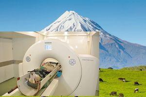 Nông dân Anh dùng máy chụp cắt lớp kiểm tra cừu giống