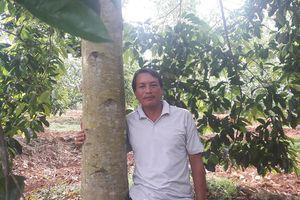 Người thích trồng 'cột chống trời', mỗi cây dổi cho thu 1 cây vàng