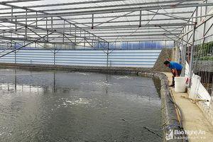 Nông dân xây nhà màng được hỗ trợ 100 triệu đồng