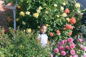 Tan chảy trước vườn hoa hồng đẹp như cổ tích của mẹ Việt ở Hà Lan