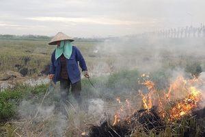 Đốt rơm rạ sau thu hoạch: Lợi bất cập hại