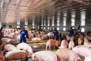 Cổ phiếu ngành nông nghiệp ra sao khi VNindex giảm mạnh?