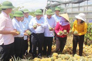 Bộ trưởng Bộ Kế hoạch-Đầu tư ra đồng động viên nông dân Quảng Trị thu hoạch dứa