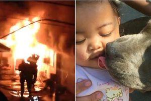 Chú chó kéo em bé 7 tháng tuổi khỏi đám cháy, cảnh báo giúp cả nhà chủ thoát thân