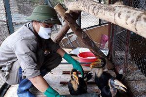 Chăm sóc động vật hoang dã: Công việc thầm lặng