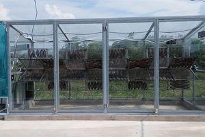 Hệ thống sấy cá bằng năng lượng mặt trời: Hiệu quả gấp 3 lần