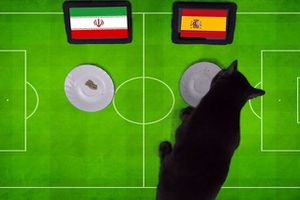 'Tiên tri' mèo báo tin vui cho tuyển Tây Ban Nha