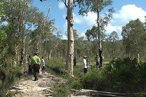 Kiên Giang: Tăng cường quản lý, bảo vệ và phát triển rừng