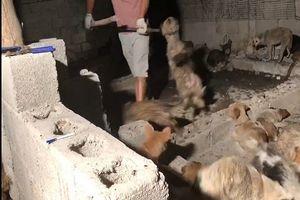 Sự thật kinh hoàng sau lễ hội thịt chó lớn nhất Trung Quốc