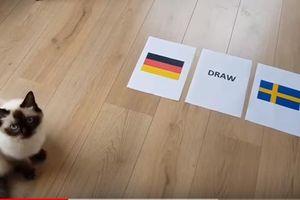 Tiên tri mèo dự đoán Đức nắm chắc phần thắng trước Thụy Điển