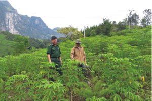 Nỗ lực đẩy lùi tình trạng tái trồng cây thuốc phiện