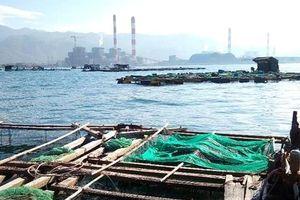 Làm rõ nguyên nhân cá lồng bè chết ở biển Vĩnh Tân