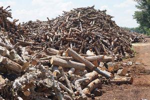 Đắk Lắk: Lò đốt than trái phép vẫn ngang nhiên hoạt động gây ô nhiễm