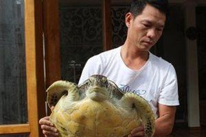 Thanh Hóa: Người dân thả rùa quý về với biển