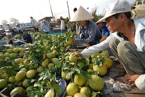 Thời điểm bước ngoặt của sản xuất cây ăn quả có múi