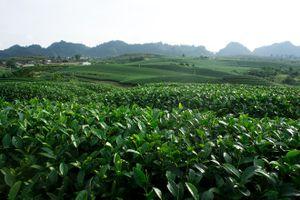 Sơn La: Phát triển du lịch gắn với bảo vệ môi trường