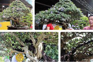 Ngắm cây cảnh bonsai quý giá của danh hài Hoài Linh
