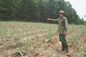 Dự án bò sữa 3.800 tỷ đồng tại Thanh Hóa: Gỡ đến đâu rối đến đó!