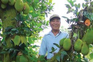 Lạ đời: Vườn cây ra trái 'quá trời' mà nói không với thương lái