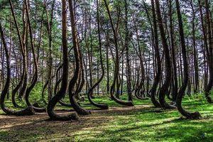 Bí ẩn khu rừng ma quái khét tiếng Ba Lan