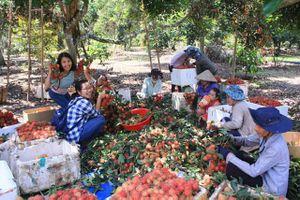 Bến Tre: Đã mắt ngắm vựa trái cây lớn nhất miền Tây Nam Bộ