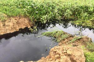 Hải Dương: Xả nước thải làm thiệt hại cá, lúa và ô nhiễm môi trường nhưng mãi không đền bù thiệt hại cho dân