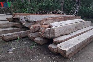 Hàng loạt cán bộ ở Quảng Bình dính án kỷ luật liên quan đến phá rừng