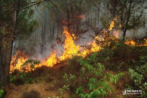 Nghệ An: Cháy rừng thông, hàng trăm người dân hối hả dập lửa giữa nắng nóng