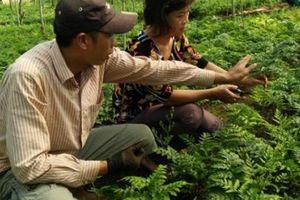 Mỗi tháng 'đút túi' 35 triệu đồng nhờ trồng cây 'lá lạ'