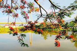 Chùm thơ về quê hương và mùa hạ