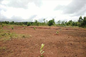 Vụ 'xẻ' đất quốc phòng, chia cho quan chức tại Đắk Nông: Ai hưởng lợi?