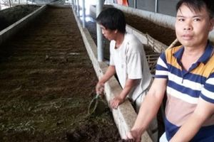 Thanh Hóa: U40 khởi nghiệp với nghề nuôi...giun trên đất bỏ hoang