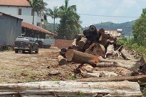Đắk Nông: Truy nã 2 đối tượng trong đường dây gỗ lậu Phượng 'râu'
