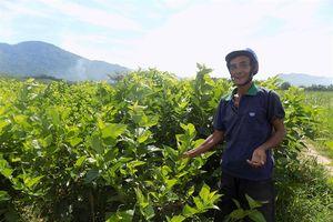 Công ty Mỹ đầu tư 50 triệu USD sản xuất tơ tằm công nghệ cao tại Quảng Nam