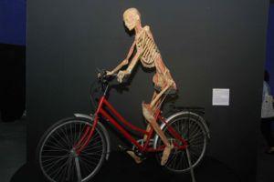 TP.HCM yêu cầu ngừng triển lãm cơ thể người được 'nhựa hóa'