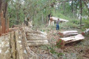 Gia Lai: Phát hiện nhiều sai phạm tại Ban Quản lý rừng phòng hộ Ia Grai